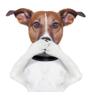 Cosa fare se il cane del vicino